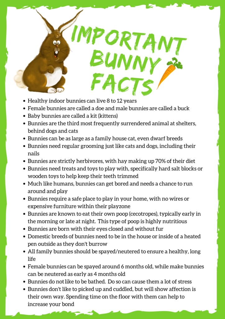 Bunny Facts